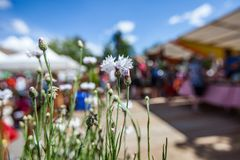 White flowers at the farmer's market with blurry people royalty free stock photography