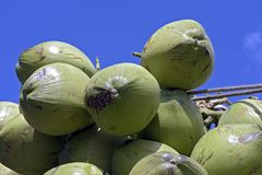 Closeup of pile of coconuts. On blue sky background, in the wholesale market of Largo do Pari. Sao Paulo, Brazil Royalty Free Stock Photo