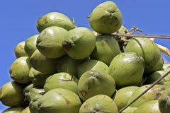 Closeup of pile of coconuts. On blue sky background, in the wholesale market of Largo do Pari. Sao Paulo, Brazil Stock Images
