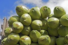 Closeup of pile of coconuts. On blue sky background, in the wholesale market of Largo do Pari. Sao Paulo, Brazil Royalty Free Stock Photos