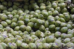 Closeup of pile of coconuts. In wholesale market. Sao Paulo, Brazil Royalty Free Stock Photos