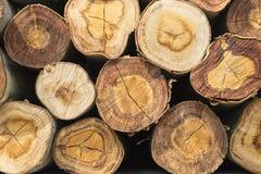 Closeup of a pile cut timber Stock Images
