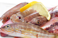 Raw fishes from the mediterranean sea Stock Photo