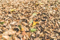 Closeup pile of dry leaves on the ground in the garden. Low angle view for wallpaper royalty free stock photo