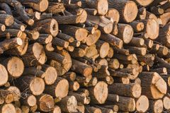 Closeup of pile of fresh cut logs. Of various diameters stacked on top of each other Royalty Free Stock Images