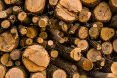 Closeup of pile of fresh cut logs. Of various diameters stacked on top of each other Stock Image