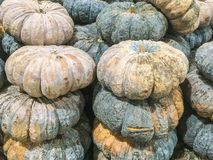 Closeup pile of pumpkin textured background. Closeup surface pile of pumpkin textured background Royalty Free Stock Images