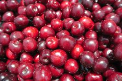 Closeup of a pile of ripe red cherries Stock Photos