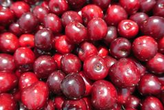 Closeup of a pile of ripe red cherries Royalty Free Stock Photo