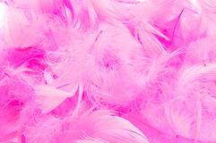 Pink feathers. Closeup of a pile of soft pink feathers Stock Image