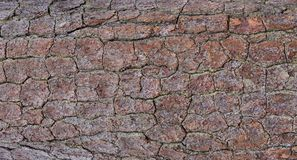 Closeup of Pine Bark Stock Photography