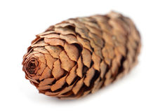 Closeup pine cone Royalty Free Stock Photography