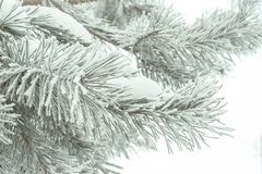 Winter pine needles Royalty Free Stock Photo
