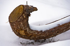 Closeup of pine tree branch in a snow at mountain Kozomor Stock Image