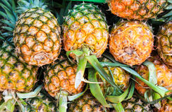 Closeup pineapple for sale in the market Stock Photos