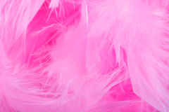 Closeup of pink boa feathers Royalty Free Stock Images