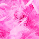 Closeup of pink boa feathers Stock Photography