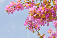 Closeup of pink flower for nature background Stock Photo