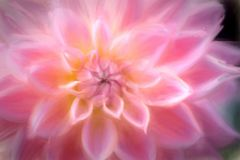 Closeup of Pink Flower Stock Images