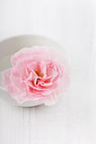 Closeup pink flower in water drops. On a white surface Royalty Free Stock Image