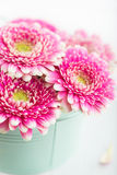 Closeup of pink gerbera flowers in a pot Stock Images