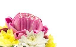 Closeup of pink lotus and chrysanthemum flower on white Royalty Free Stock Images