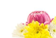 Closeup of pink lotus  and chrysanthemum flower on white Royalty Free Stock Photo