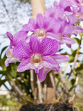 Closeup of pink orchids. Stock Photography