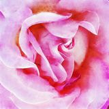 Closeup Pink Rose Fine Art. Digital painting created by hand using several techniques to resemble watercolor on paper Stock Photo