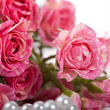Closeup pink roses Royalty Free Stock Photography