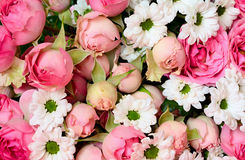 Closeup of pink roses and white daisy flowers bouquet Stock Photography