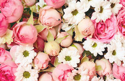 Closeup of pink roses and white daisy flowers bouquet Royalty Free Stock Photography