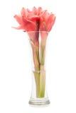 Closeup pink torch ginger flower etlingera elatior on vase Stock Photography