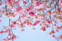 Closeup of pink trumpet flower Royalty Free Stock Photos