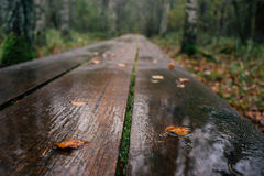Closeup on plank hiking trail wet after rain. Autumn background. Shallow depth of field royalty free stock photos