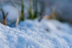 Closeup of a plant in snow in winter stock photography
