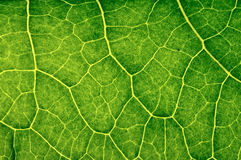 Closeup plant texture background Royalty Free Stock Image
