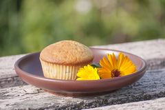 Closeup of muffin and blossom of marigold in sunlight stock images