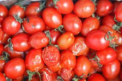 Closeup plenty crumpled red fresh ripe cherry tomatoes together with stems are awaiting distribution in box on farmers market. stock image