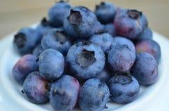 Closeup of plump organic fresh picked blueberries. Plump and ripe fresh picked Blueberries Royalty Free Stock Photo
