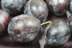 Closeup of plums Royalty Free Stock Photography