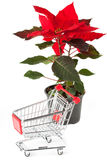 Closeup Poinsettia flower with sopping cart. On the white background royalty free stock photos