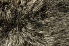 Closeup of polar Fox fur Stock Image