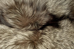 Closeup of polar Fox fur Royalty Free Stock Photography