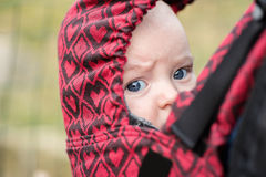 Closeup portrait of baby in a carrier Stock Photos