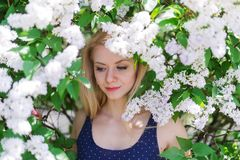 Closeup portrait of a beautiful young woman in blue dress on the background of the cherry blossoms stock photography