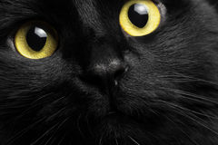 Close-up portrait black cat. With yellow eyes Royalty Free Stock Photos