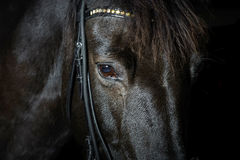 Closeup portrait of black horse in the dark Stock Image