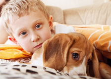 Closeup portrait boy with puppy. Closeup portrait boy with beagle puppy in the bed Royalty Free Stock Photo