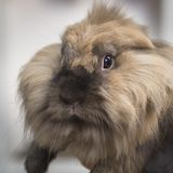 Closeup portrait of a pretty decorative rabbit stock photos